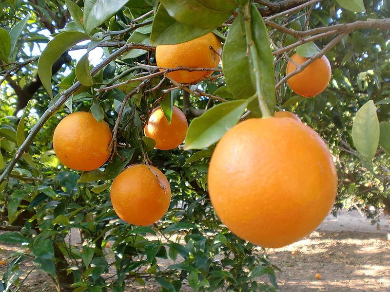 Bio liranjak eta mandarinak ikastolaren alde